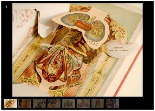 Anatomical flap books