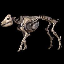 Figure 6. Porcine pig skeleton model.